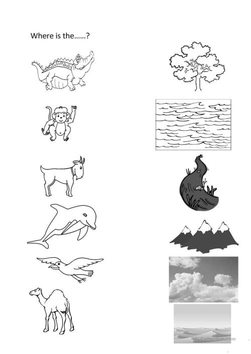 small resolution of English ESL animal habitats worksheets - Most downloaded (14 Results)