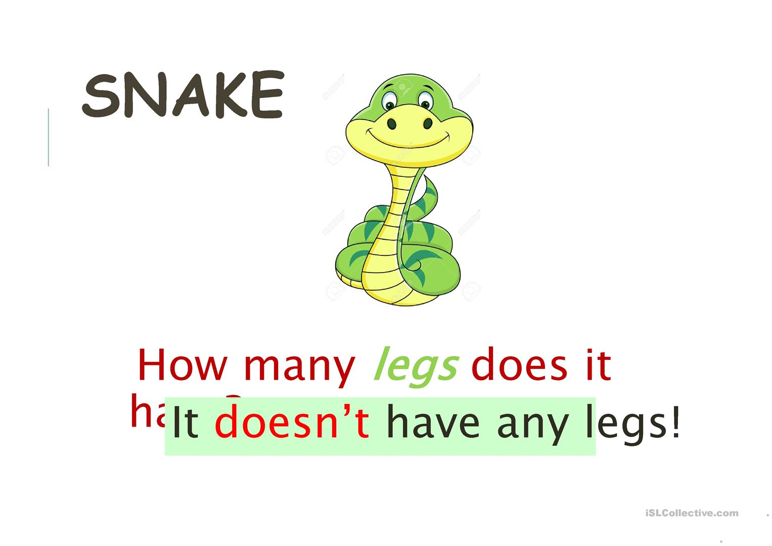 How Many Legs Does It Have