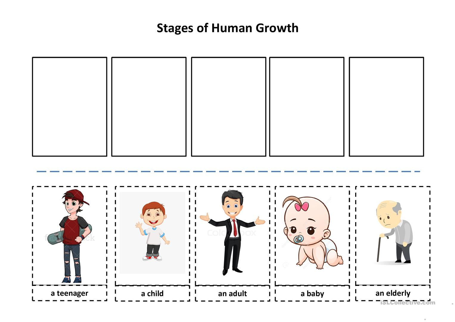 Human Life Cycle Worksheet