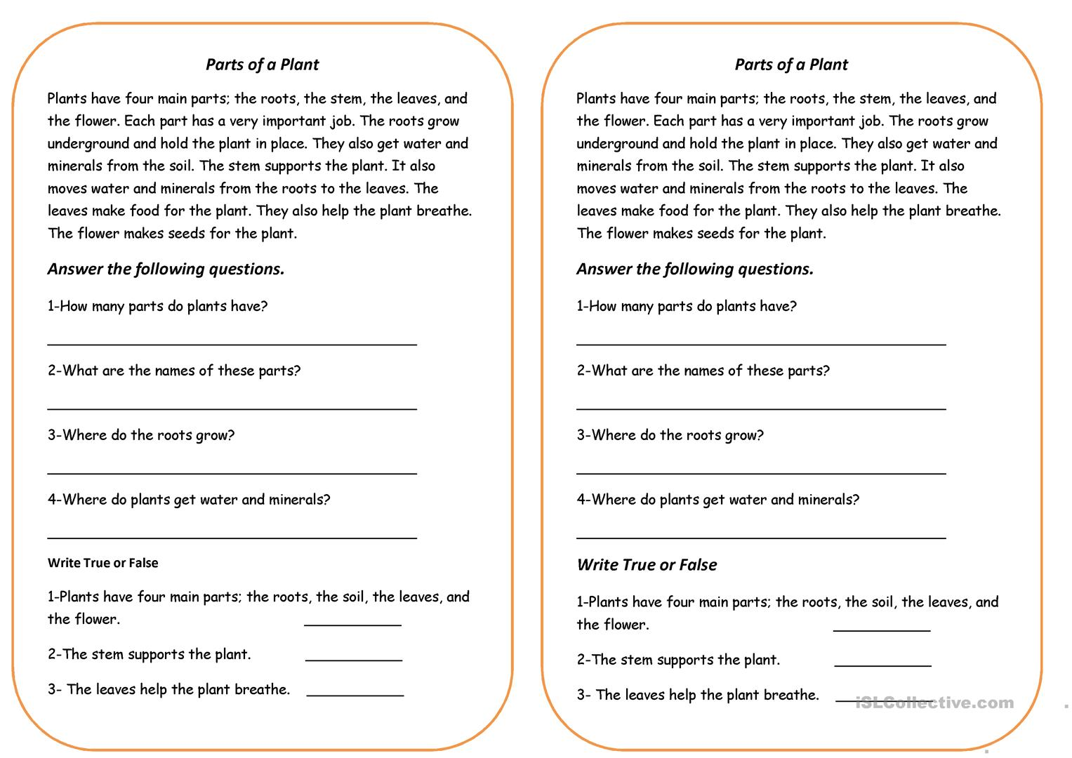 Parts Of A Plant Worksheets For Kindergarten
