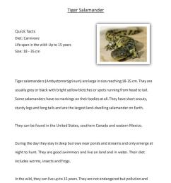 Reading Comprehension - Tiger Salamander - English ESL Worksheets for  distance learning and physical classrooms [ 1079 x 763 Pixel ]
