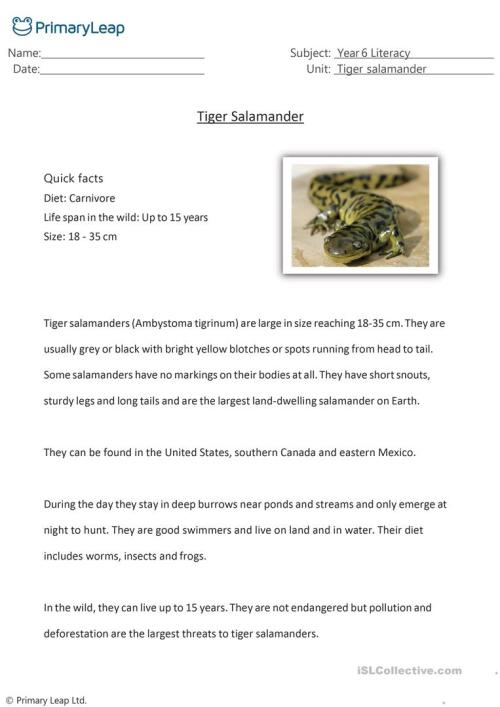 small resolution of Reading Comprehension - Tiger Salamander - English ESL Worksheets for  distance learning and physical classrooms