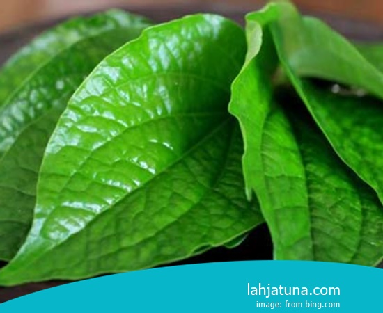 5 Kinds Of Natural Herb Traditional For Gastric Wound From Plant