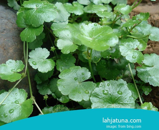 8 Kinds Of Supplement Traditional For Hepatitis B From Plant