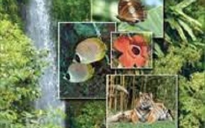 GOVT SEEKS TO BOOST, PROMOTE ECOTOURISM POTENTIAL