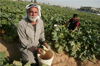 GAZA MINISTRY STOPS IMPORTING ISRAELI FRUITS