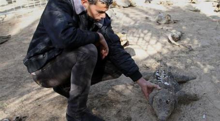 ZOO ANIMALS SUFFER FROM ISRAEL'S BLOCKADE ON GAZA STRIP