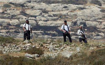 SETTLERS DESTROY 1200 PALESTINIAN OLIVE TREES NEAR HEBRON