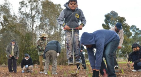 AUSSIE MUSLIMS SPREAD HARMONY BY PLANTING TREES