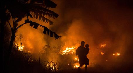Activists Urge Indonesian President to Reopen Investigations into 15 Firms Burning Forest on Purpose