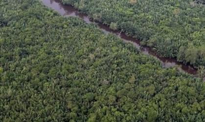 UN Lauds Indonesia's Peatland Management