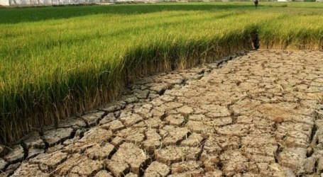Anticipating Drought, Indonesian Govt Allocates 93,860 Water Pumps