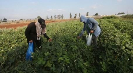 Palestinian Farmer Promote Organic Farming