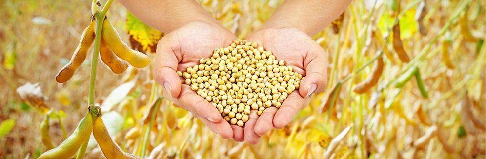 Ингредиенты для пищевой промышленности 2