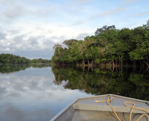 The Amazon in Peru