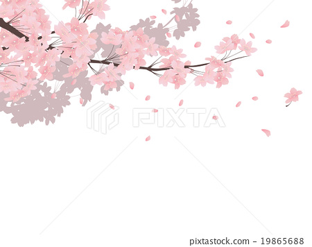 Rose Petals Falling Wallpaper Transparent Gif Yoshino Cherry Tree Stock Illustration 19865688 Pixta
