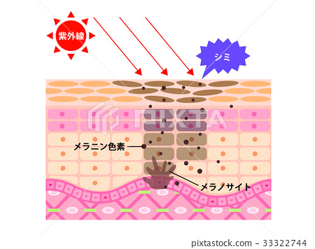 skin cross section diagram efie and pwm wiring for hho systems vector stock illustration 33322744