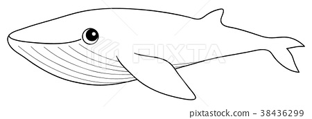 Blue Whale Coloring Page Stock Illustration 38436299 Pixta