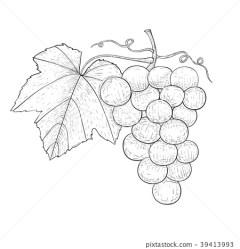 Grapes Outline hand drawn sketch Stock Illustration [39413993] PIXTA