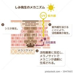 Skin Cross Section Diagram Mercruiser Mechanical Fuel Pump Skinned Stock Illustration 39476653