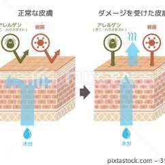 Skin Cross Section Diagram 2002 Nissan Xterra Engine Skinned Stock Illustration 39613555