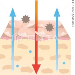 Skin Cross Section Diagram 2004 Vw Jetta Engine Stock Illustration 43515696
