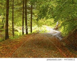 Forest background Stock Illustration [44780811] PIXTA