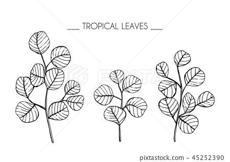 How To Draw Tropical Leaves Step By Step