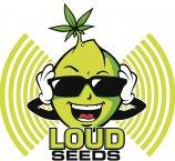 Logo Loud Seeds