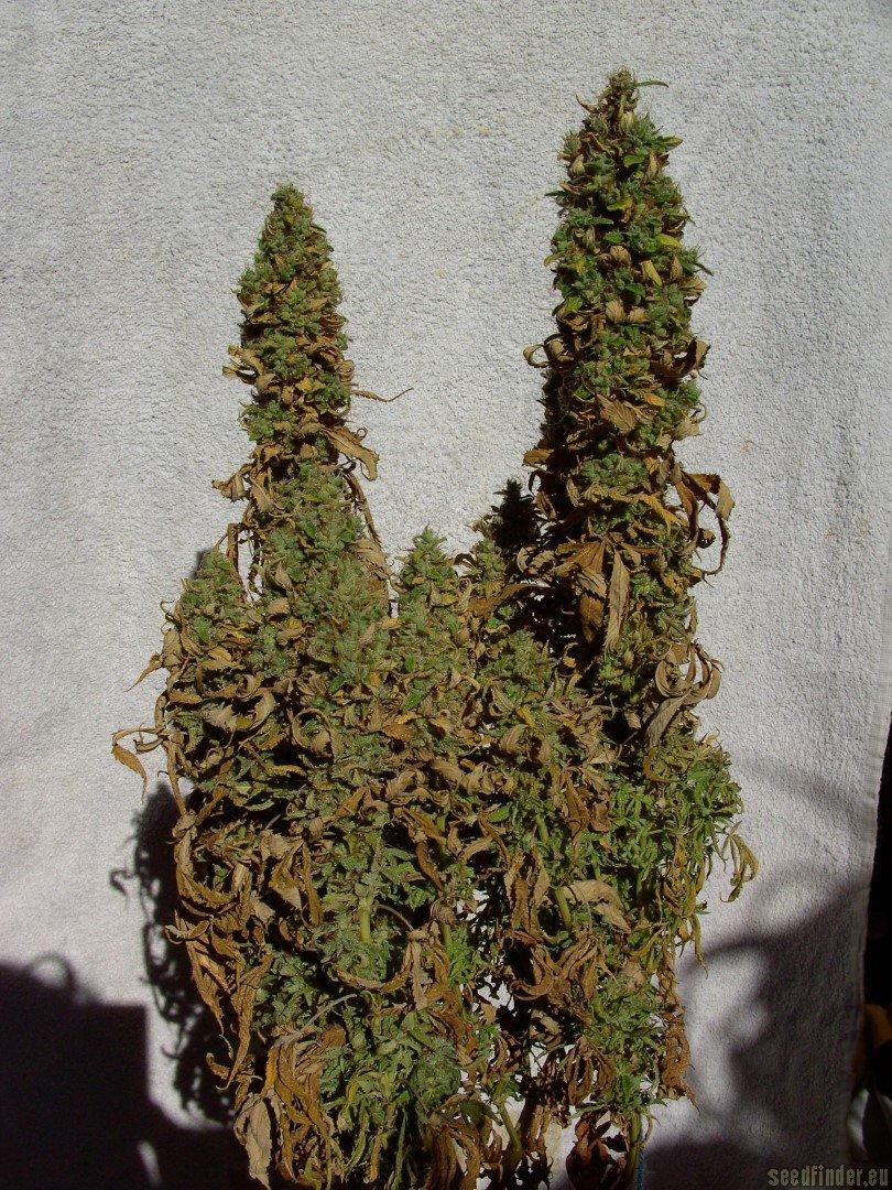 Good Indoor Plants