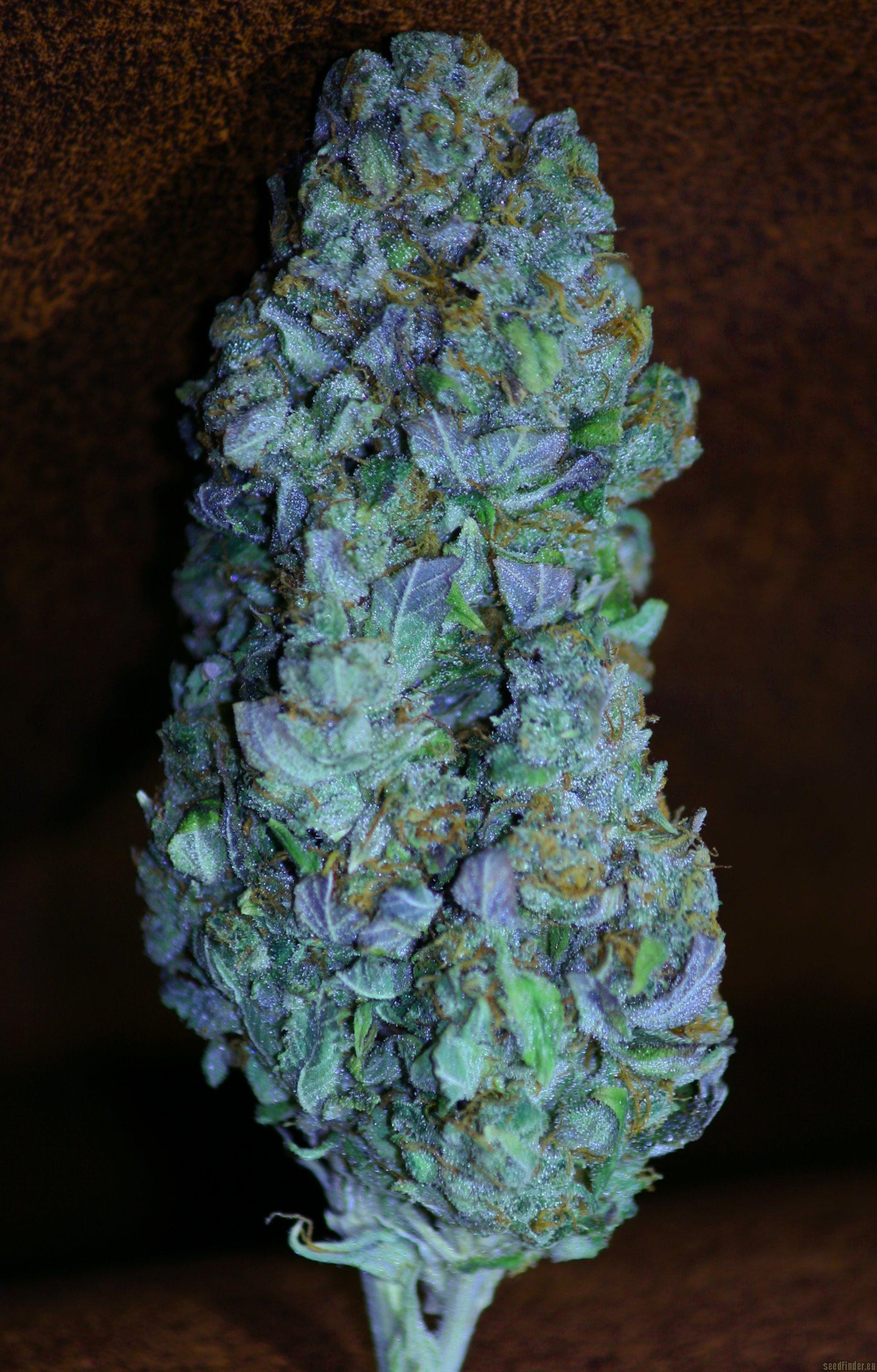 Kandy Kush Reserva Privada  Cannabis Strain Info
