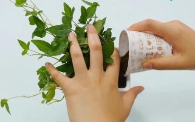 How to make fertilizer using food waste.