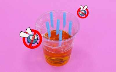 How to make fruit fly traps