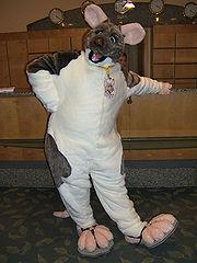 Colifox  WikiFur the furry encyclopedia