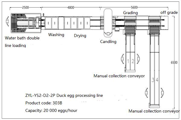 303B Duck egg processing line