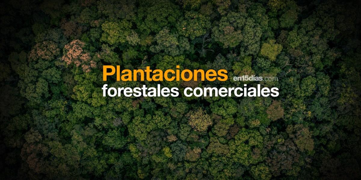 plantaciones forestales comerciales