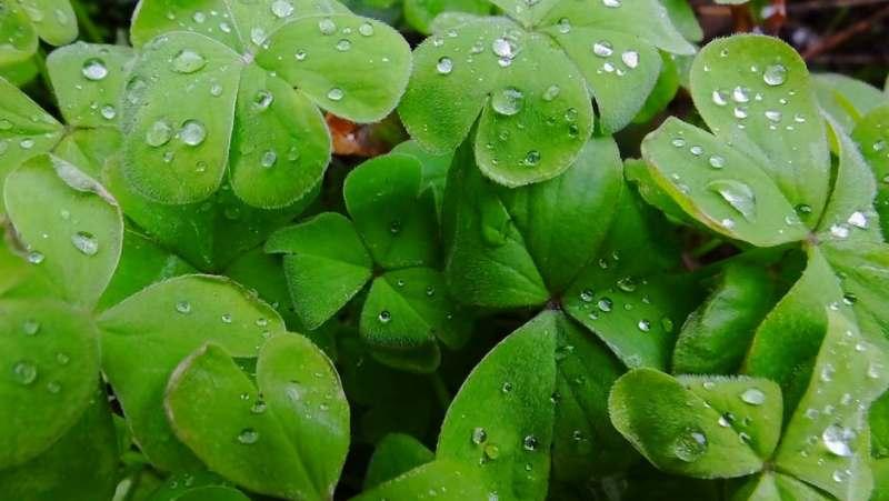 Imagen de hojas mojadas con agua