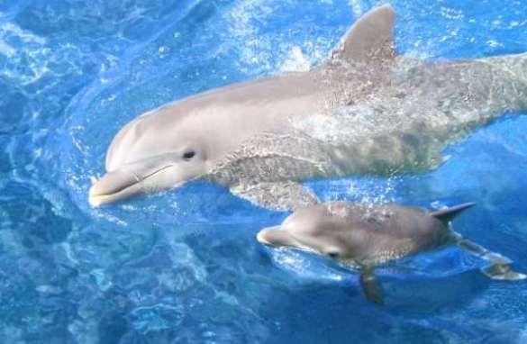 δελφίνια ζώα