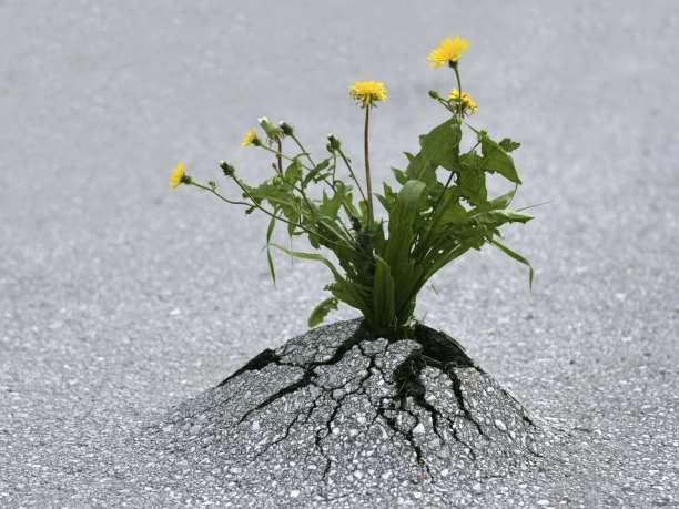 φυτο δρόμος άσφαλτος λουλουδι σουρεαλ