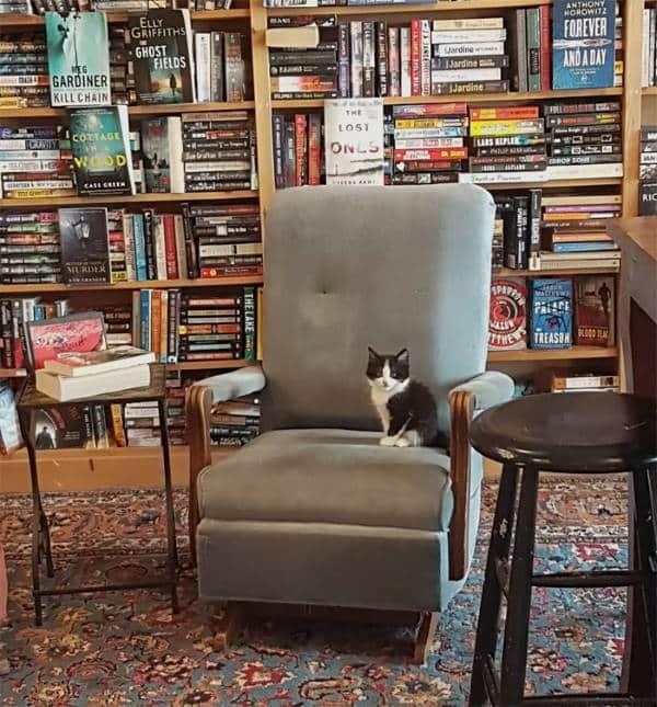 Βιβλιοπωλείο στον Καναδά φιλοξενεί αδέσποτες γάτες και οι πελάτες μπορούν να τις υιοθετήσουν (Φωτογραφίες)