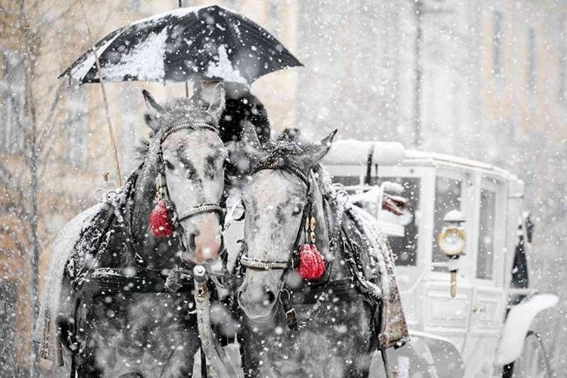 αλογα χιονι αμαξα παρελθον