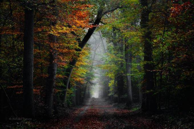 Forest Photography - Beautiful Photos of Woods in the Netherlands 8
