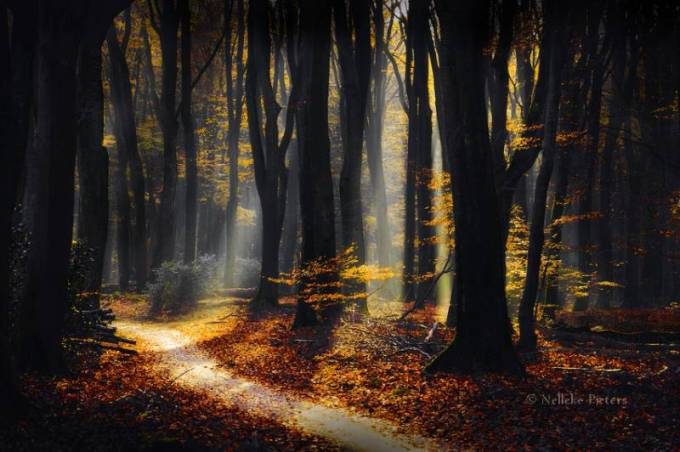 Forest Photography - Beautiful Photos of Woods in the Netherlands 4