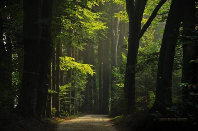 Forest Photography - Beautiful Photos of Woods in the Netherlands 1