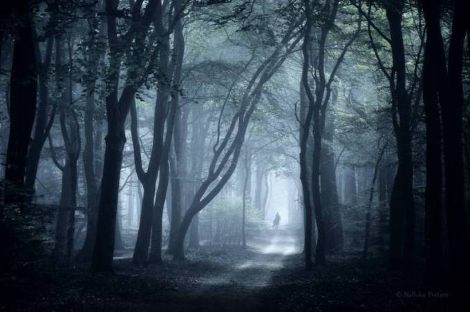Forest Photography - Beautiful Photos of Woods in the Netherlands 5