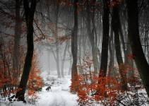 Forest Photography - Beautiful Photos of Woods in the Netherlands 12