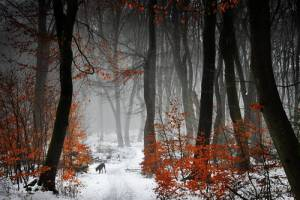 Forest Photography - Beautiful Photos of Woods in the Netherlands 7