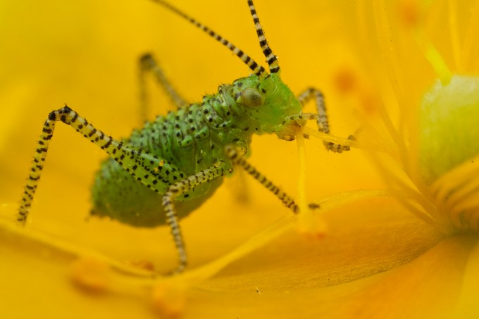 Macro Photography by Alistair Campbell-10