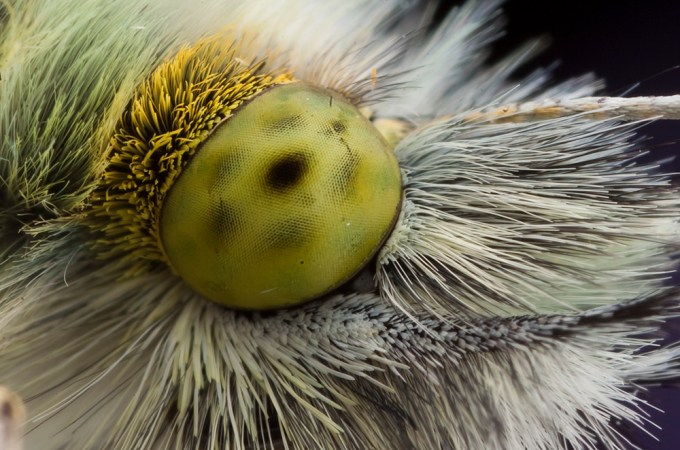 Macro Photography by Alistair Campbell-15