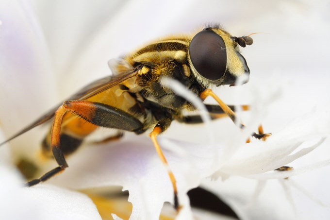 Macro Photography by Alistair Campbell-16